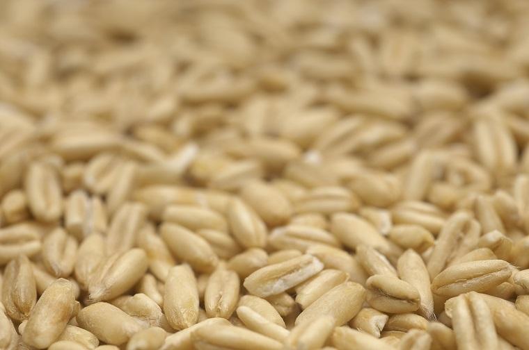玄米は白米よりたんぱく質が高い