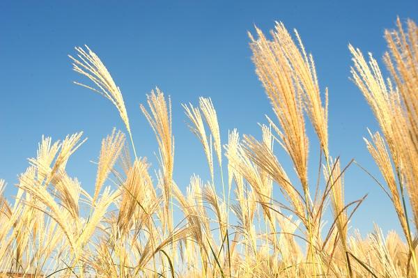 海外のボディービルダーが全粒小麦パスタを好んで食べる理由とは?